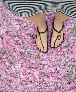 GladSoles-Flowers